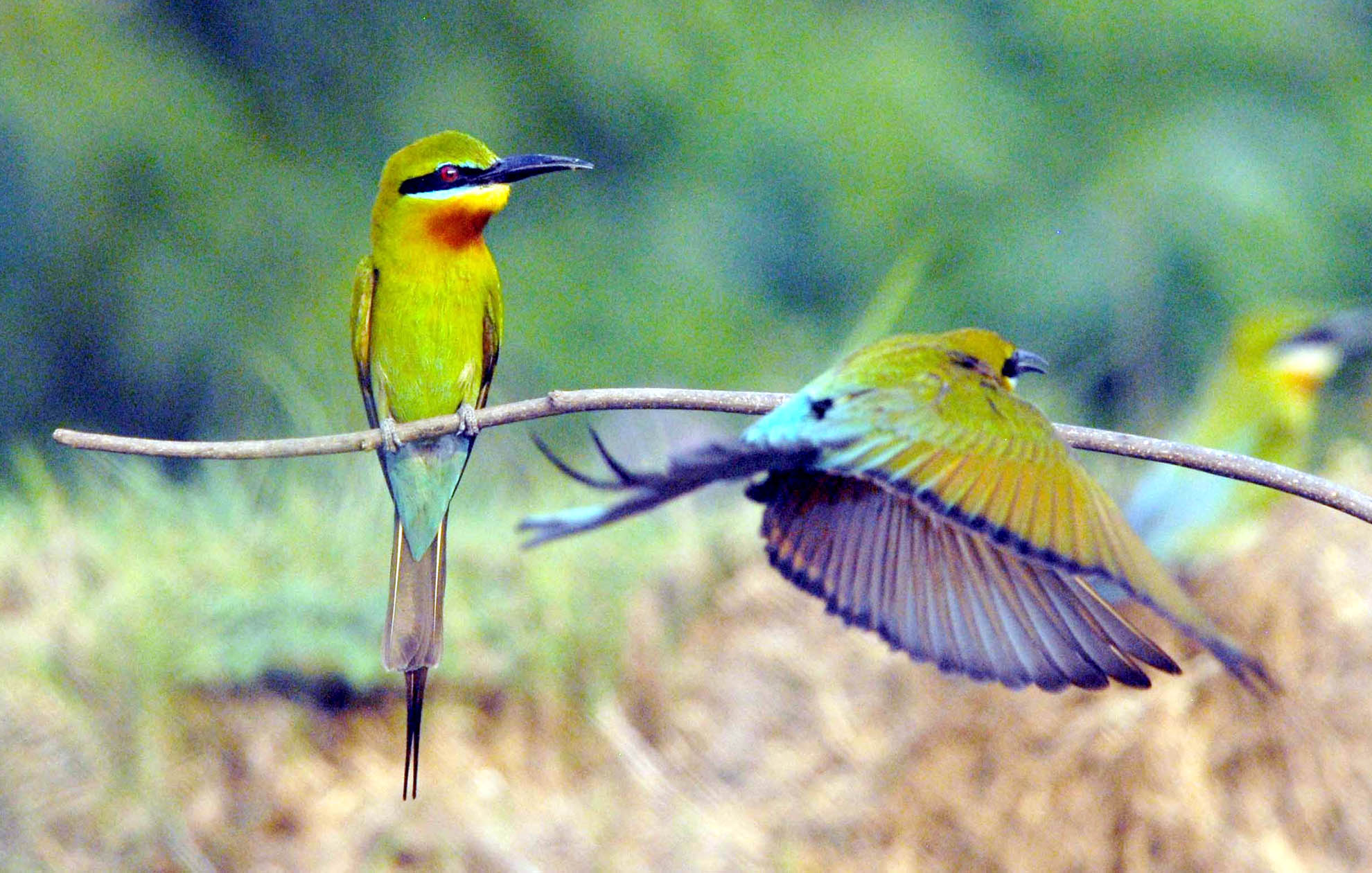 essay on bird sanctuary Bird sanctuaries are nature facilities that advocate the conservation of various species of birds and their natural habitats while promoting rehabilitation and survival.